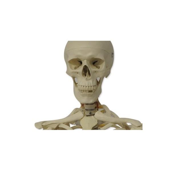Contenedor residuos y deshechables 4L